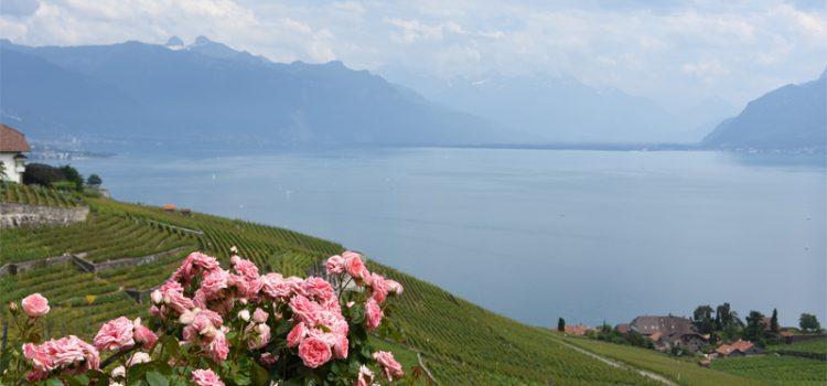 På opdagelse i Lavaux' vingårde i det sydlige Schweiz